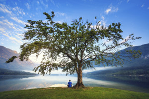 mindfulness stress reduction training tree at lake with blue sky